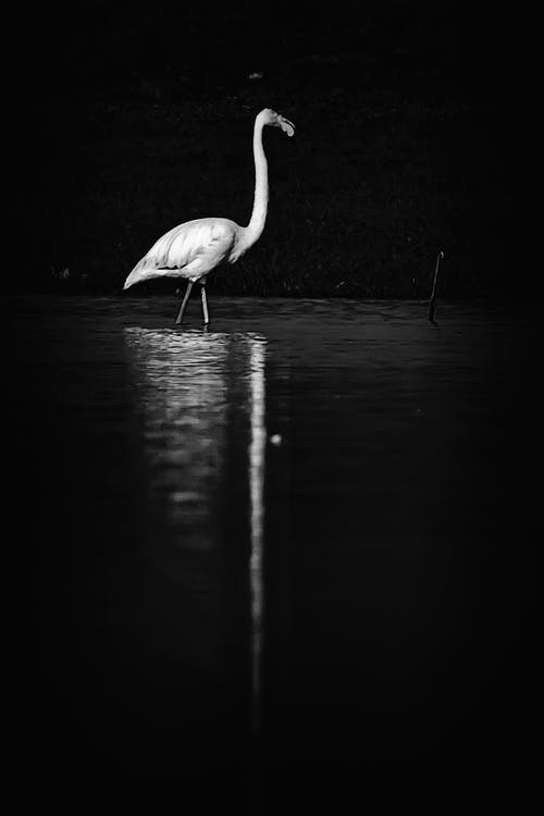 Бесплатное стоковое фото с вода, зеркало, отражение, черно-белый