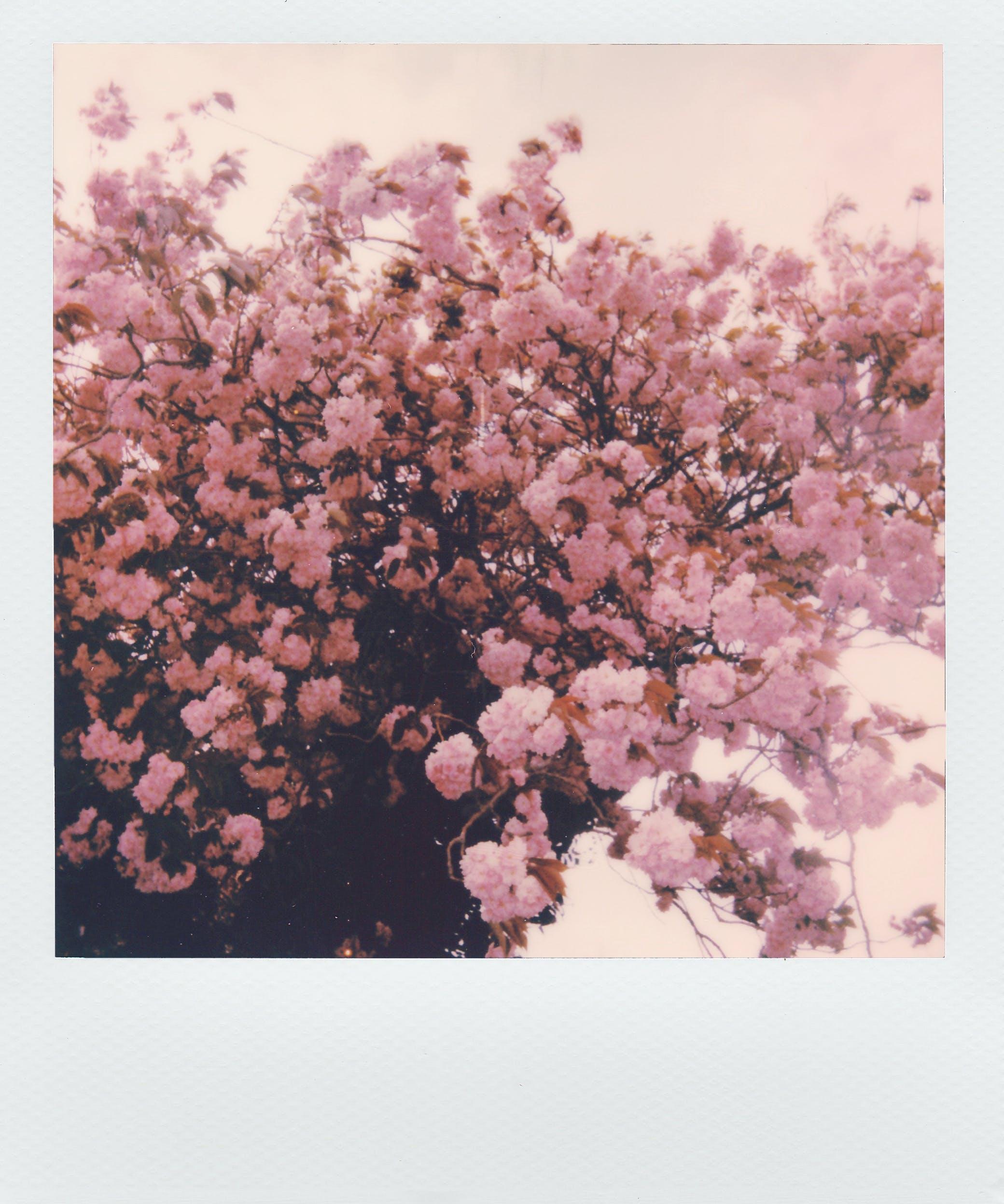คลังภาพถ่ายฟรี ของ กรอบรูป, กำลังบาน, ดอกไม้, ดอกไม้สวย
