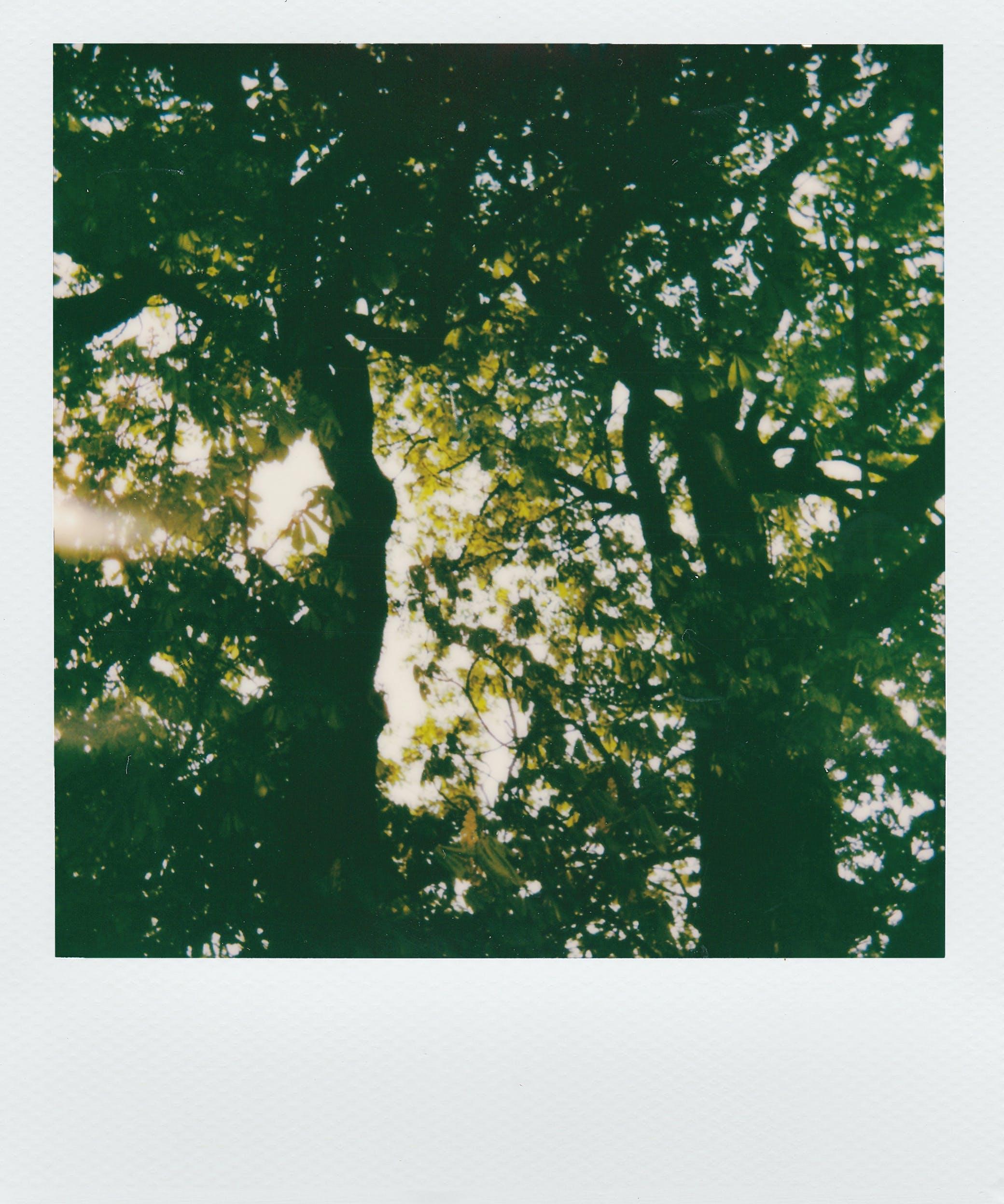 Základová fotografie zdarma na téma barva, dekorace, denní světlo, design