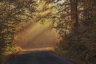 wood, light, road