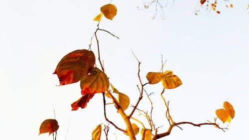 Darmowe zdjęcie z galerii z gałąź, jesień, jesienne liście
