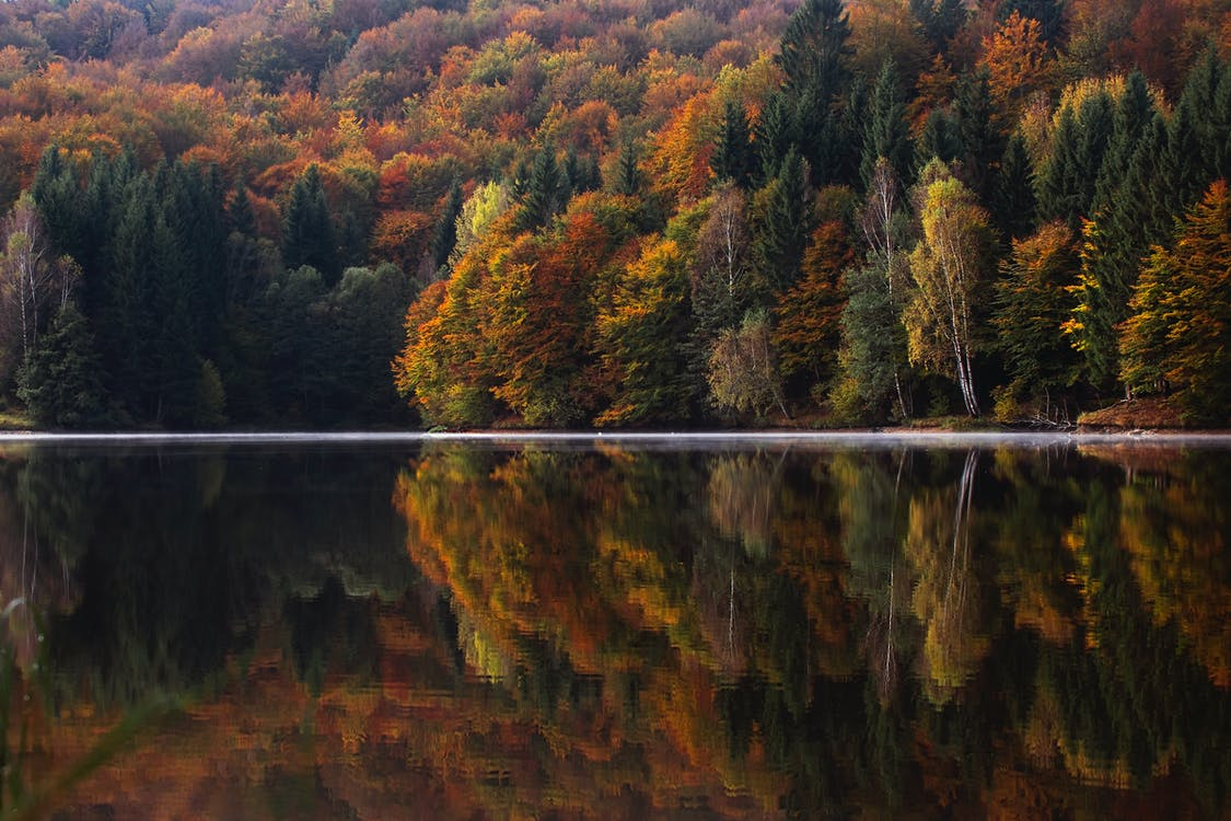 Body of Water Near Orange and Green Leaf Trees