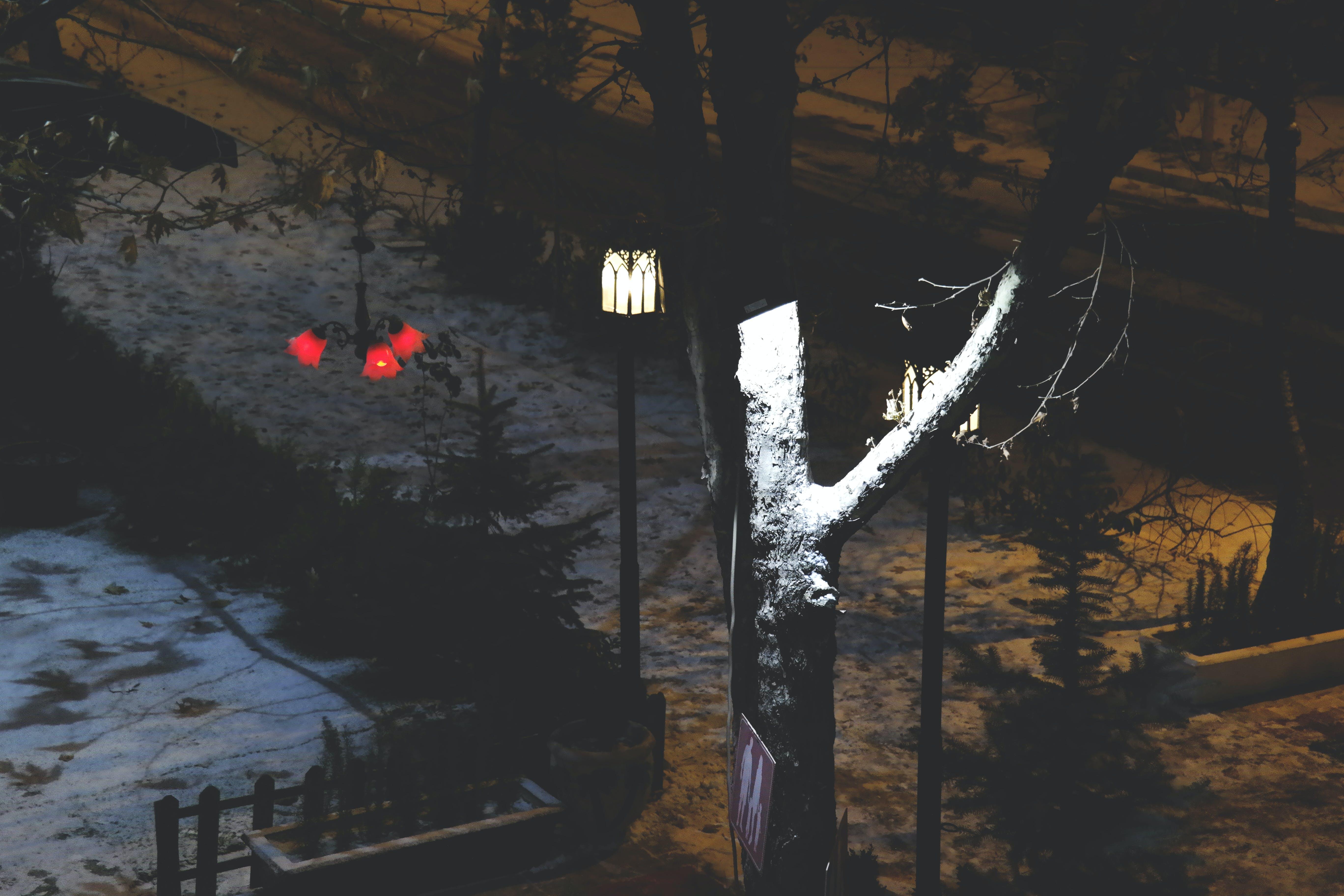 bäume, beleuchtung, dunkel