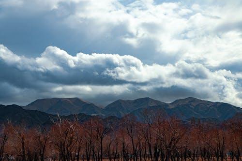 Gratis lagerfoto af blå bjerge