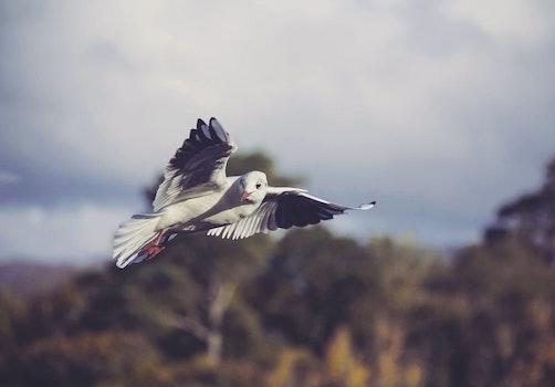 Free stock photo of #birds #seagull
