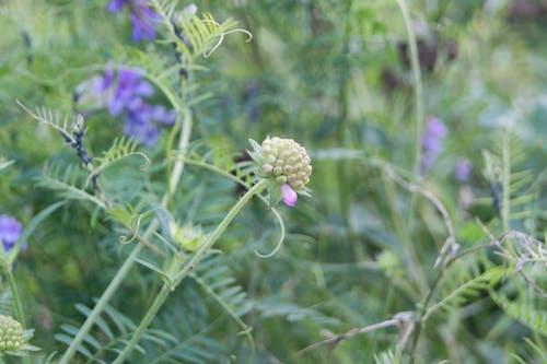 Free stock photo of flower meadow, flowering meadow, purple flowers