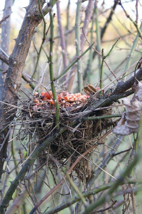 Free stock photo of autumn mood forest, bird nest, bird's nest