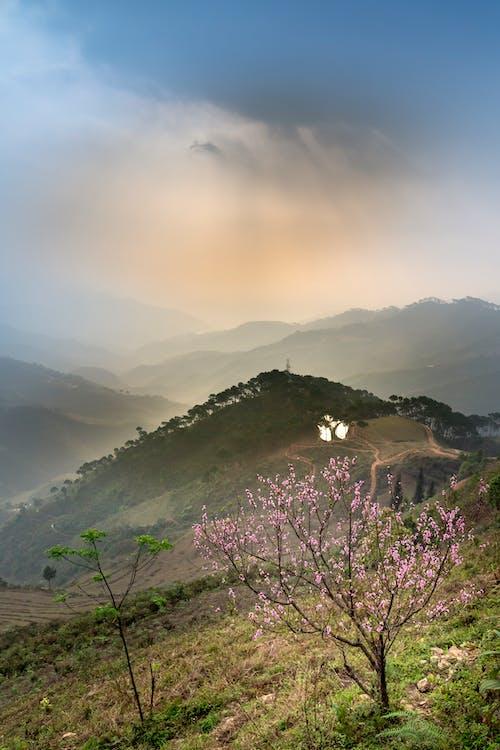 Fotos de stock gratuitas de al aire libre, árbol, escénico, montaña