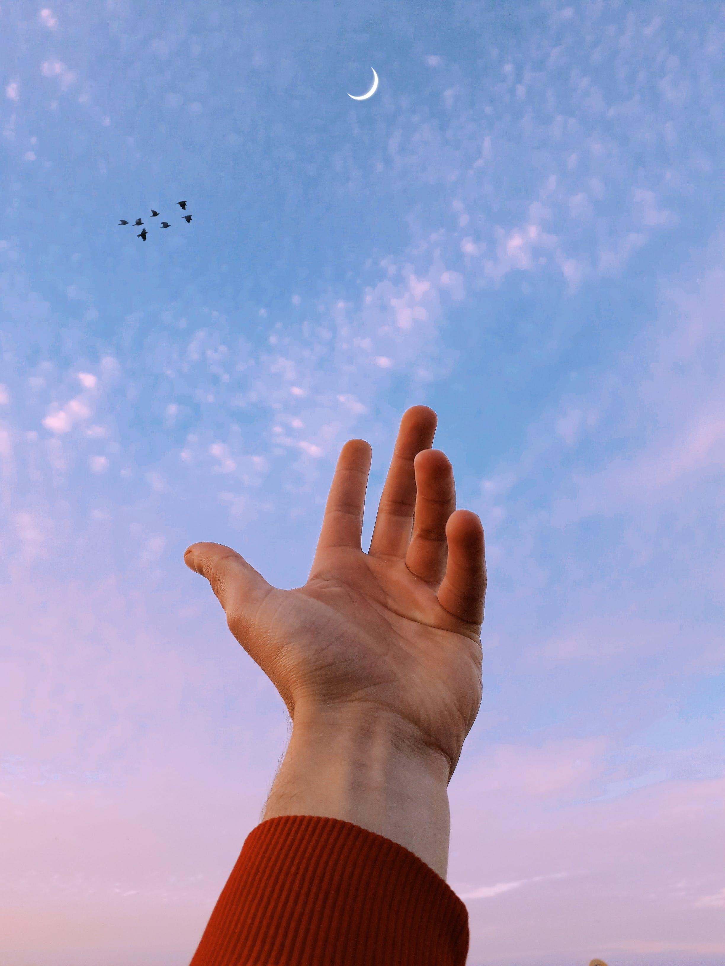 Foto d'estoc gratuïta de arribant, cel, mà, persona