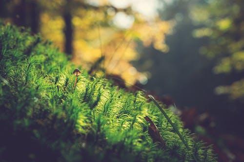 Photos gratuites de centrales, champignon, mousse, profondeur de champ