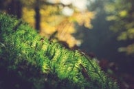 moss, plants, outdoors