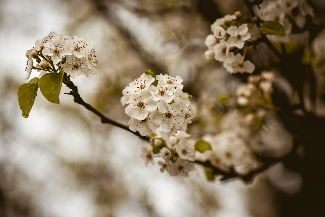 albero, bocciolo, fiore