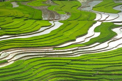 Fotobanka sbezplatnými fotkami na tému čerstvosť, farma, letecký záber, orná pôda