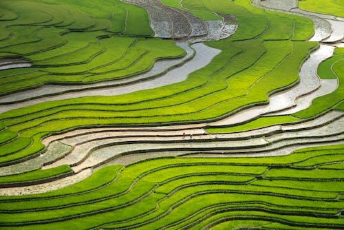 Foto profissional grátis de agricultura, área, aumento, cênico