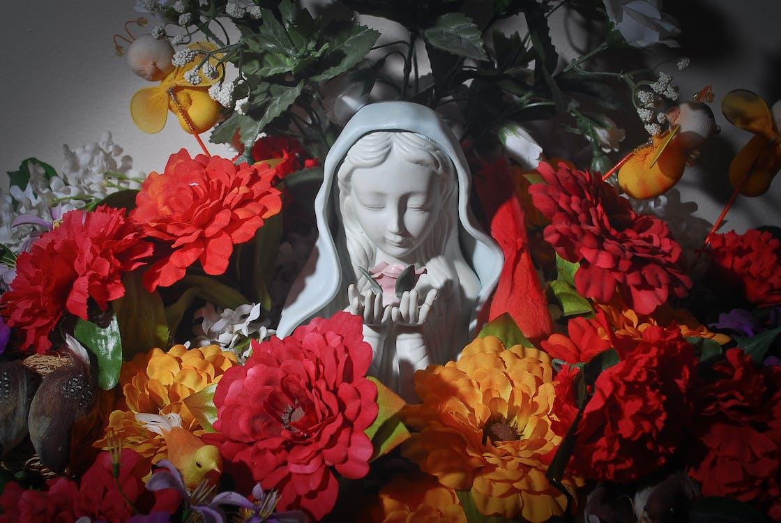 Základová fotografie zdarma na téma kytka, maria, marie