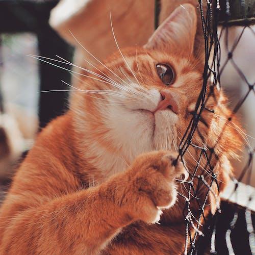 Orange Cat On Focus Photography