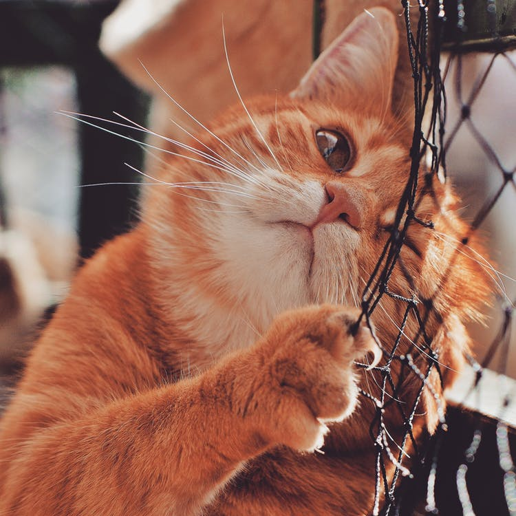 Orange Cat On Focus Photography