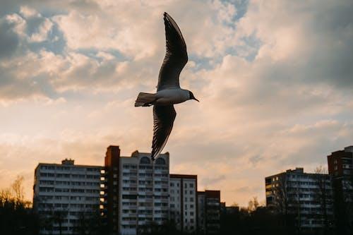 かもめ, シティ, ダウンタウン, 動物の無料の写真素材