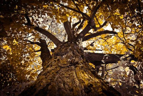Бесплатное стоковое фото с дерево