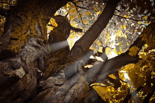 Worm's Eye View of Tree during Daytime