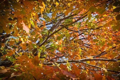 Бесплатное стоковое фото с automn, дерево