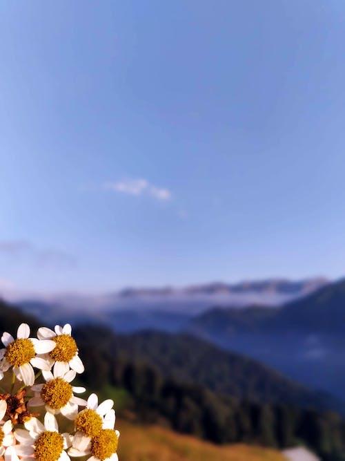 Gratis arkivbilde med åser, blå, fjell, natur