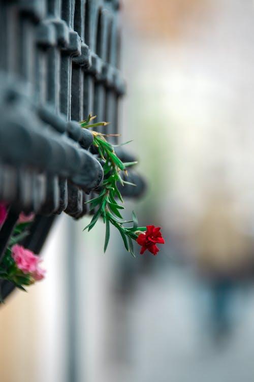 Ilmainen kuvapankkikuva tunnisteilla eristynyt, jousi, kasvi, Kauneus