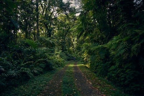 #doğa, #orman içeren Ücretsiz stok fotoğraf