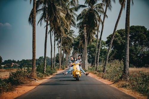 オートバイ, カップル, ココナッツの木, スクーターの無料の写真素材