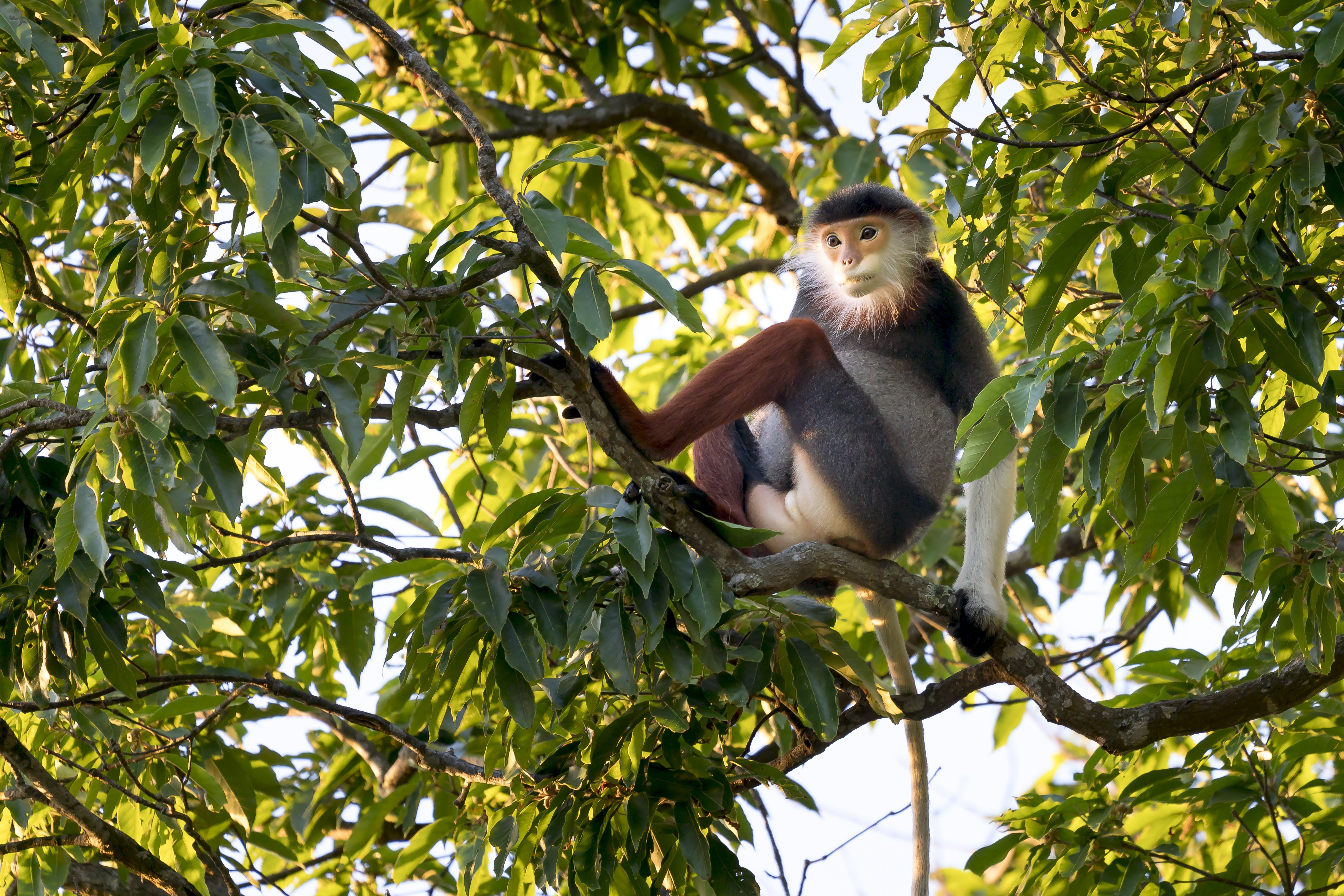 Fotobanka sbezplatnými fotkami na tému divé zviera, divočina, listy, opica