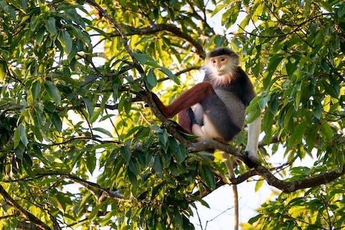 나뭇잎, 동물, 동물 사진, 앉아 있는의 무료 스톡 사진