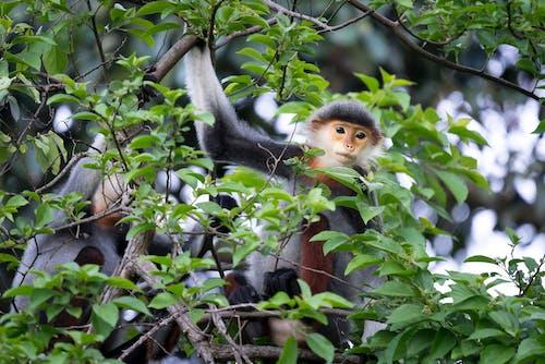 동물, 동물 사진, 야생, 야생동물의 무료 스톡 사진