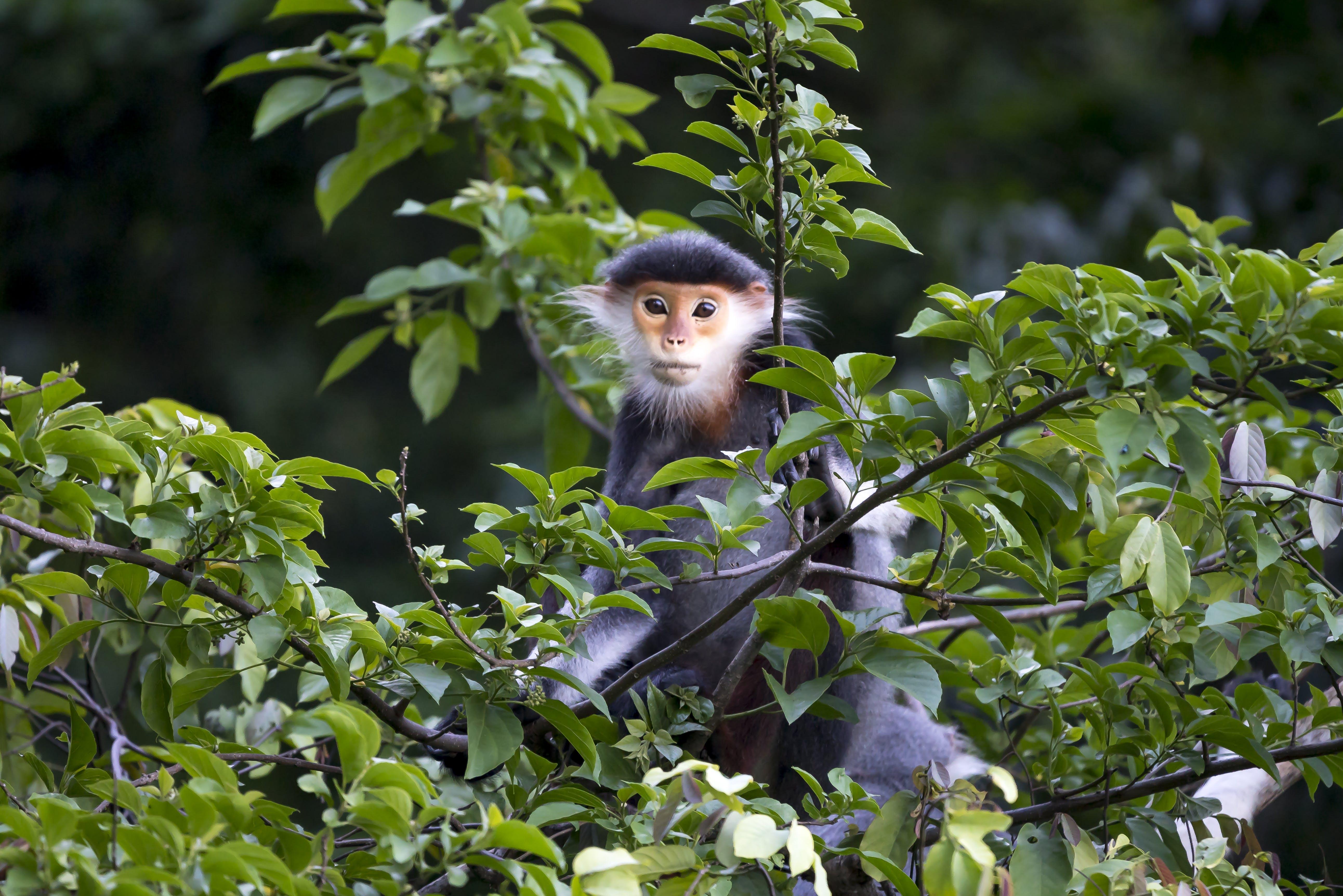 Základová fotografie zdarma na téma divočina, divoké zvíře, fotografie divoké přírody, fotografování zvířat