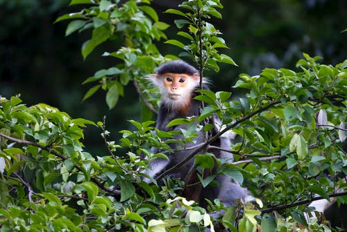 Brown and White Monkey on Tree