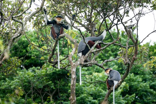 Three Monkeys on Tree