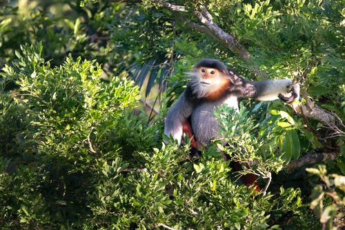 Monkey Sitting on Tree Branch