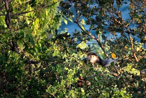 公園, 分支機構, 動物, 動物攝影 的 免费素材照片