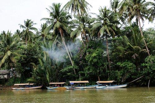Foto profissional grátis de barcos, canoa, rio tropical, tropical