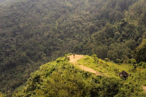 Foto profissional grátis de árvores, auge, caminhada, cenário