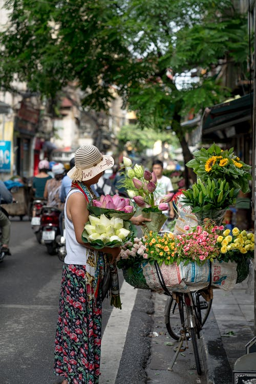 女人, 插花, 日光, 花 的 免费素材照片