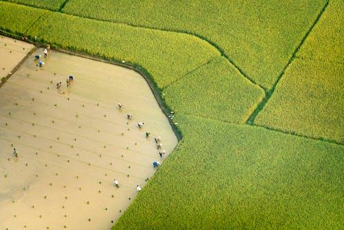 Základová fotografie zdarma na téma farma, fotka zvysokého úhlu, fotografie zdronu, hřiště