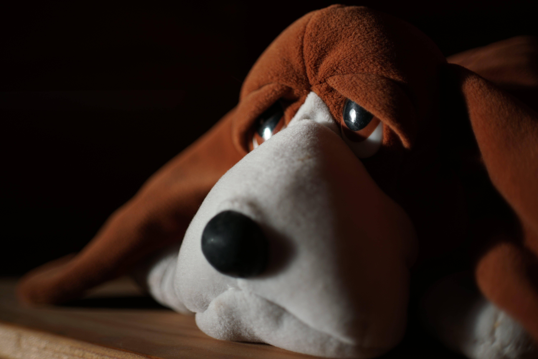 a6500, ソニー, マクデストロ, 動物のぬいぐるみの無料の写真素材