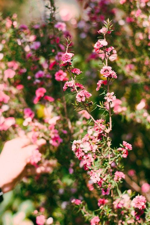 Foto profissional grátis de ao ar livre, aumento, borrão, botânico