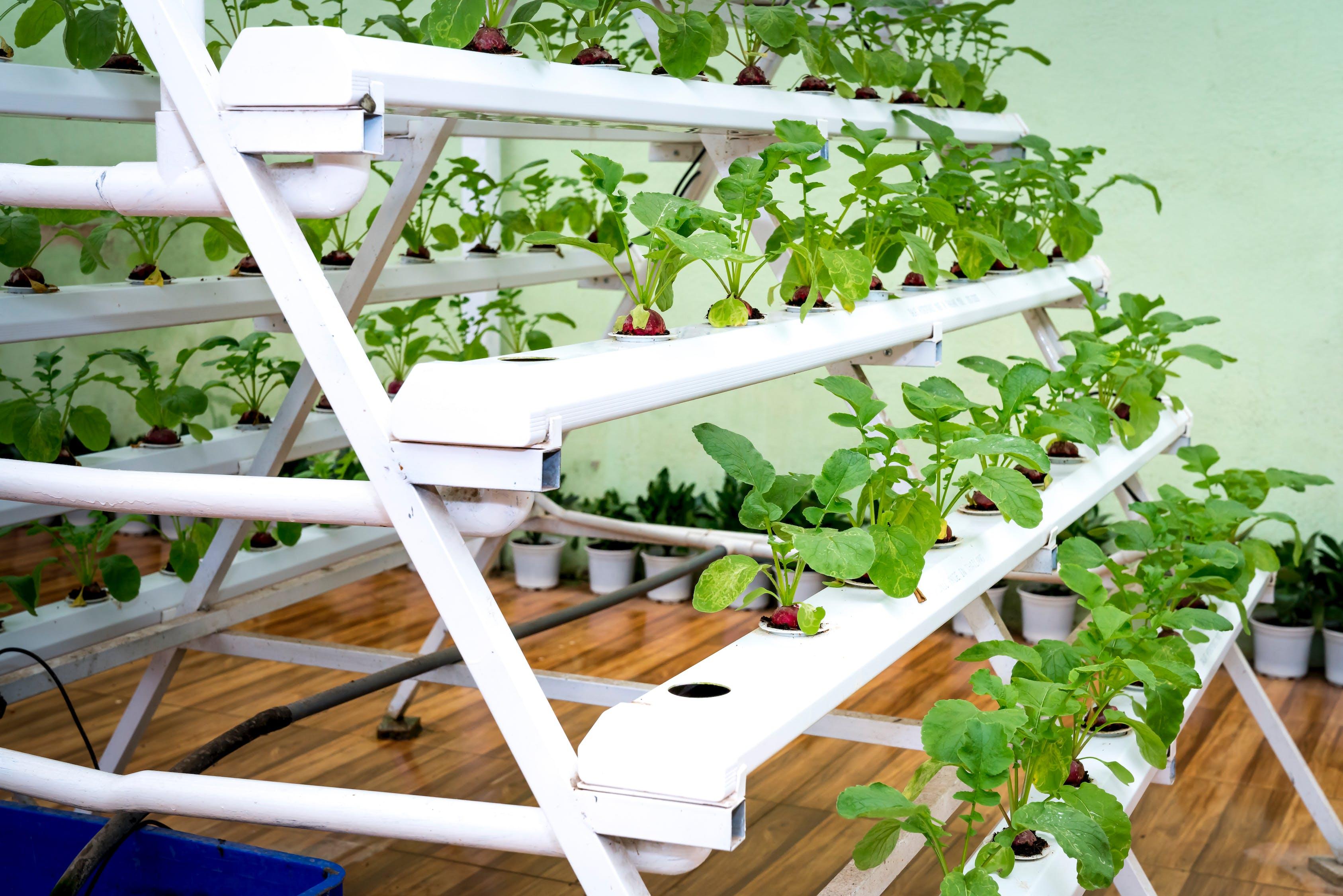 Piled green plant on rack