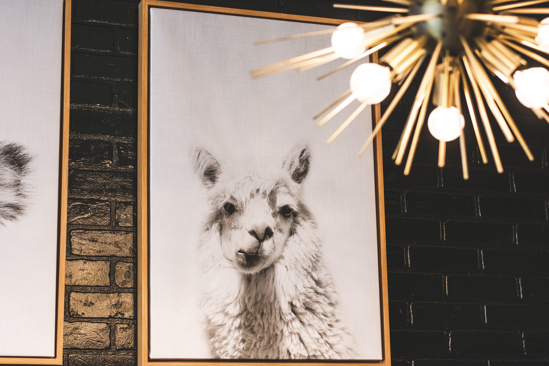 Imagine de stoc gratuită din animal, artă, artă pe perete, aspect