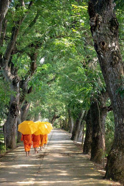 Foto d'estoc gratuïta de a l'aire lliure, branques d'arbre, camí, gent