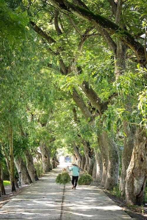 가지, 걷고 있는, 경치