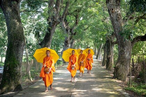 Безкоштовне стокове фото на тему «гілки, гілки дерев, Денне світло, дощ»