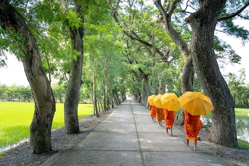 Foto stok gratis berjalan, biksu, gerakan, indah