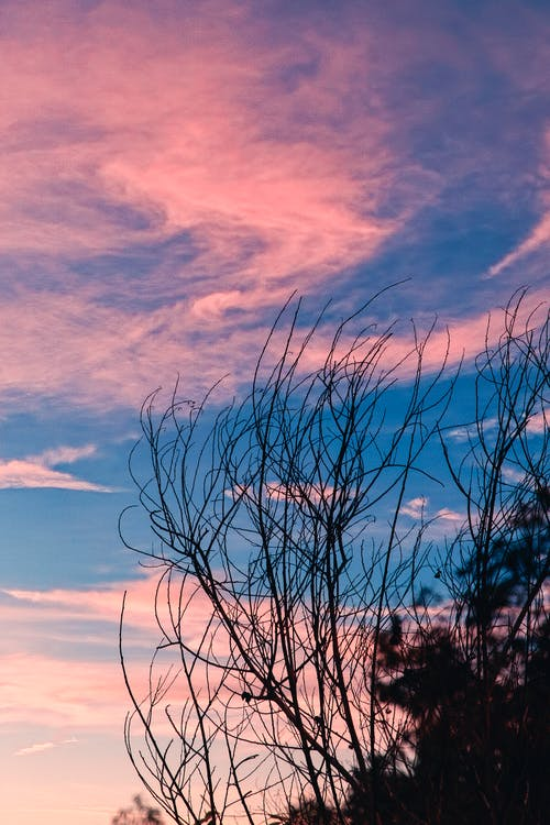 คลังภาพถ่ายฟรี ของ #branch #pink #blue #beautifulsky #, #sky #sunset #goldenhour #beautiful #